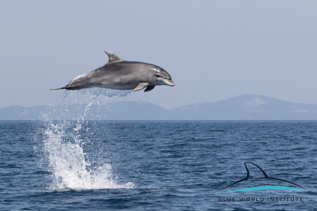 Update on Nola & Elsa – our very own adopted dolphins!